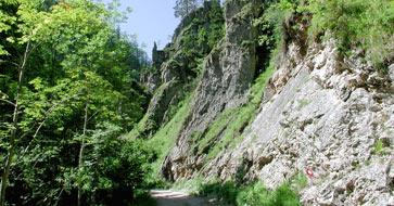 Foto: Wolfgang Dröthandl / Wander Tour / Großes Maiereck - Rundwanderung / Anstieg durch die Spitzenbachklamm - ein Schmetterlingsparadies! Quelle: www.oe1.orf.at / 06.04.2011 16:26:57